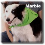 a_Marble_20100828