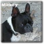 a_Mickey
