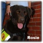 a_Rosie