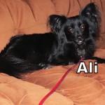 a_ali