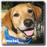 a_amstel_lg