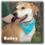 a_bailey