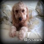 a_bissous