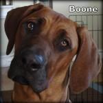 a_boone