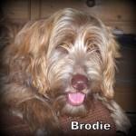 a_brodie_mr