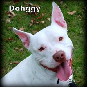 Dohggy