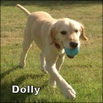 a_dolly