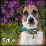 a_gypsy