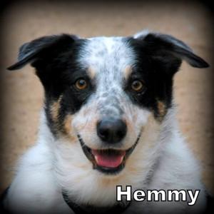 Hemmy
