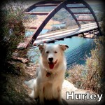a_hurley1