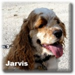 a_jarvis