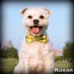 a_kaxan