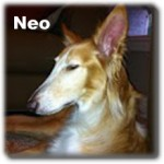 a_neo