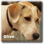 a_olive