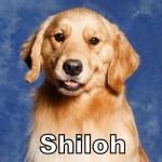 a_shiloh