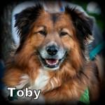 a_toby