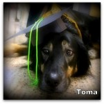 a_toma