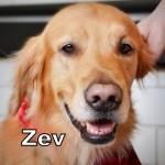 a_zev