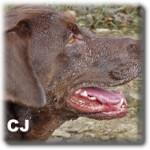 r_CJ-profile