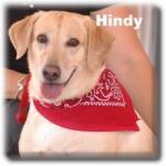 Hindy